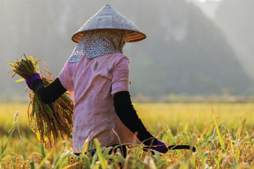 Traditional Asian farmer Google Images