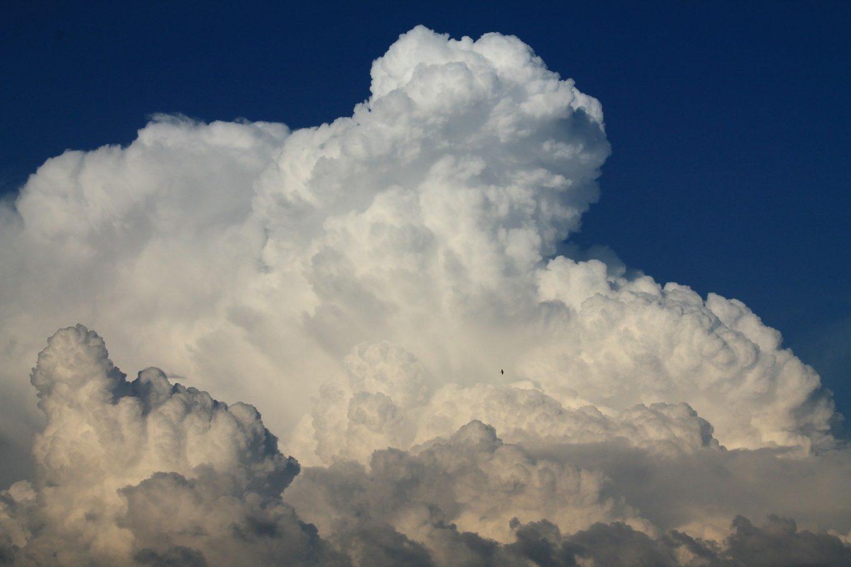 Understanding the Popularity of the Salesforce Cloud