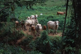 Sheep and Cattle Farming