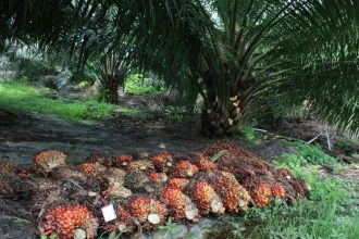Majority of Companies Don't Know Origin of Their Palm Oil